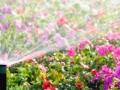Спринклерный полив цветов