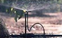 sprinkler7